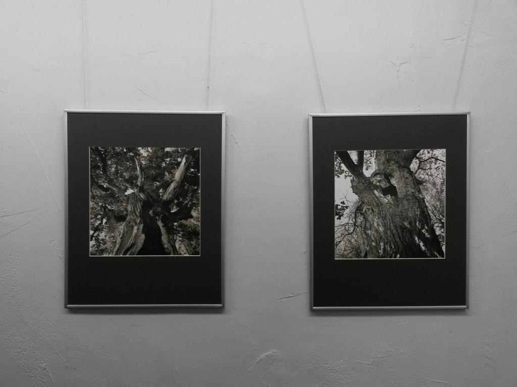 Выставка фотографий Сергея Кочергина