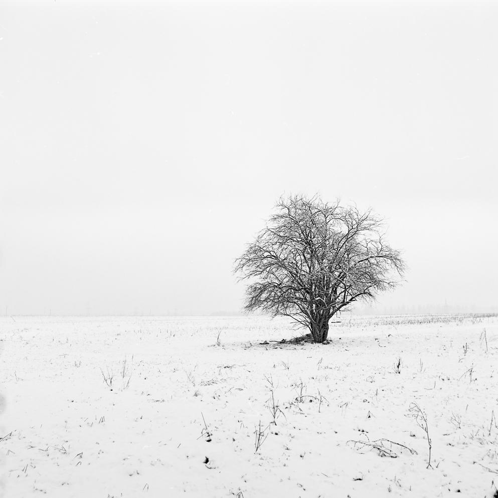 Дерево. Март, 2015